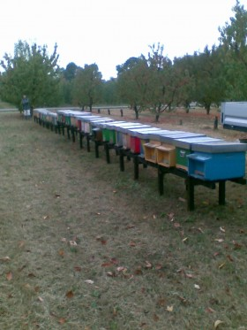 Our enterprise - Beekeeping Cantoni & Ottani